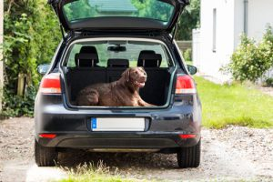 Mit dem Hund im Auto in den Urlaub
