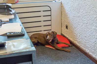 Hundegeruch im Büro entfernen oder vermeiden
