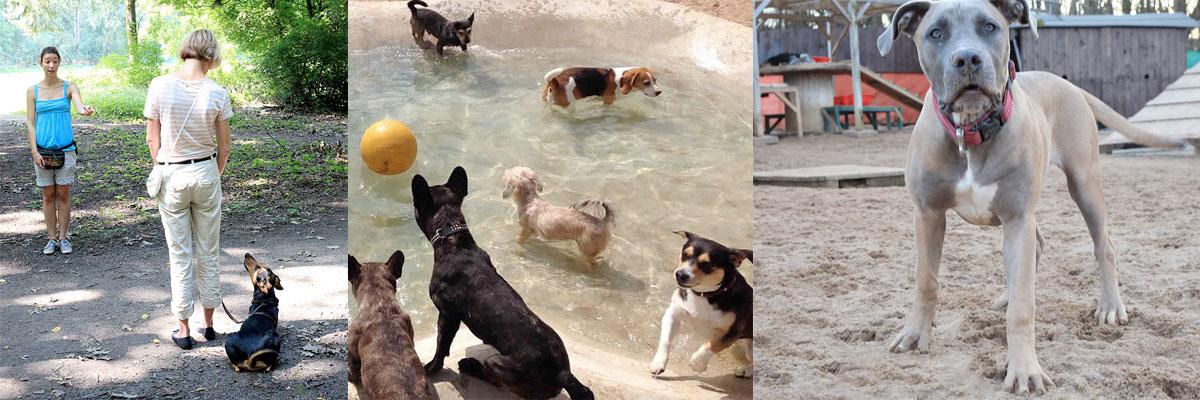 Eindrücke des McDog Hundekindergartens